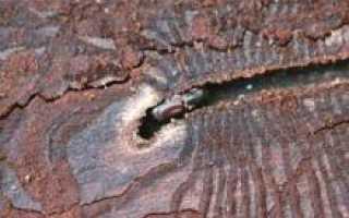 Средства борьбы с жуками-короедами: пошаговая инструкция