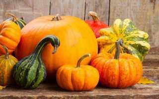 Декоративная тыква: описание, разновидности, особенности выращивания