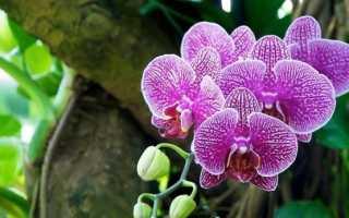 Когда пересадить орхидею в домашних условиях в горшок: можно ли делать это после покупки в магазине