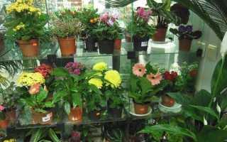 Посадка цветов в горшки – секреты и советы специалистов + Видео
