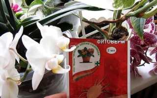 Применение препарата Фитоверм для орхидей, растений от паутинного клеща