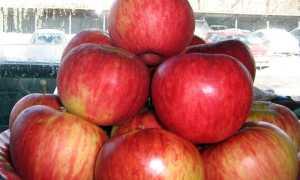 Сорт яблони Апорт: описание, достоинства и недостатки, подвиды, фото, отзывы
