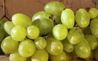 Виноград Зарница (Аркадия раняя): описание, фото, селекция, особенности выращивания сорта