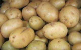 Картофель Агата: описание сорта, характеристики, достоинства, сроки и правила посадки, агротехника, отзывы