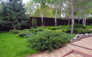 Посадка хвойных деревьев осенью: рекомендации и советы