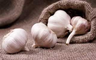 Как сажать чеснок под зиму и чтобы был крупный