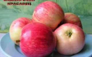 яблоня башкирская красавица: описание, фото, отзывы садоводов