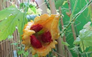 Момордика — выращивание из семян и уход, особенности размножения