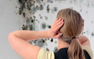 Как удалить грибок со стен народными средствами