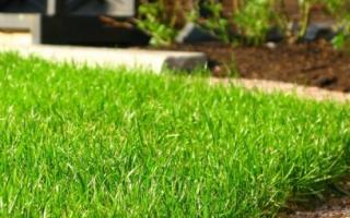 Личный опыт устройства газона своими руками: отчет садовода