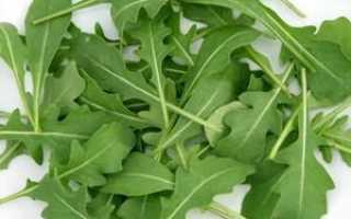 Трава руккола: описание и полезные свойства, выращивание в теплице, в открытом грунте и на подоконнике