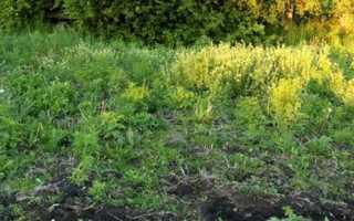 Кислая почва – как определить по сорнякам + фото