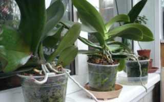 Нужны ли отверстия в горшке для орхидеи и как сделать дырки самостоятельно?