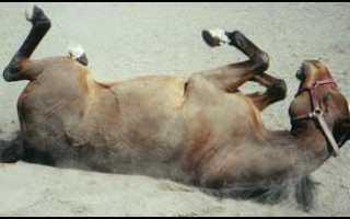 «Конь не валялся» – значение и происхождение фразеологизма