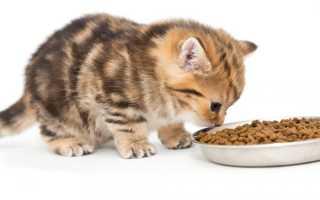 Как воспитывать котенка в домашних условиях: способы наказания и поощрения