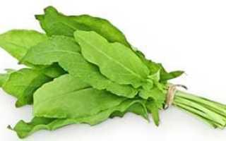 Какой бывает щавель и какую пользу или вред он нам несет, рецепт супа из полезного растения