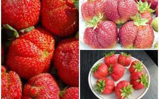 Почему ягоды клубники корявые?