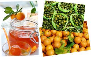 Можно ли есть плоды цитруса Цитрофортунеллы