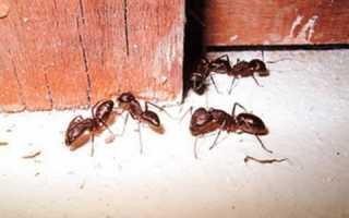 Как избавиться от муравьев в деревянной бане