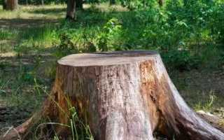 Как выкорчевать пень без усилий и быстро: удаление корней деревьев