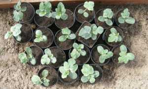 Как вырастить арбуз на Урале: сорта и особенности посадки