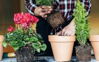 Лунный КАЛЕНДАРЬ пересадки комнатных растений 2020 год: ОБЗОР + ФОТО