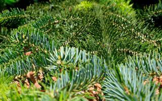 Хвойное дерево лиственница: фото, названия видов и сортов с описанием, условия выращивания лиственницы