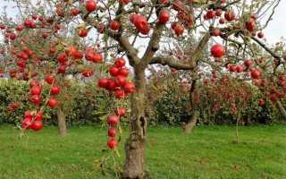 Болезни плодовых деревьев и их лечение с фото