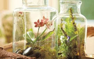Сад в бутылке: как сделать чудо своими руками + фото